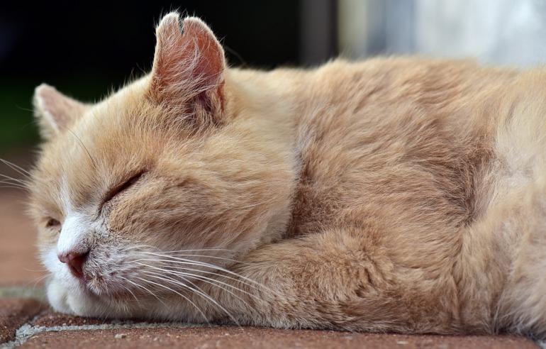 cat-3722566_960_720