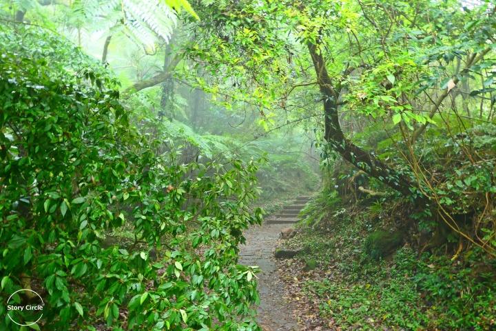 匆匆台北│進入雲霧繚繞的陽明山!夢幻湖、擎天崗、涓絲步道一日遊